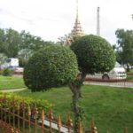 Фото номер 47 с храма Ват Чалонг