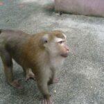 Гора обезьян фото номер 1