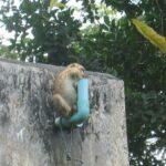 Гора обезьян фото номер 12