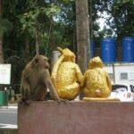 Гора обезьян фото номер 2