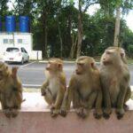 Гора обезьян фото номер 3
