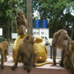 Гора обезьян фото номер 4