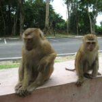 Гора обезьян фото номер 5