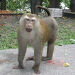Гора обезьян фото номер 6