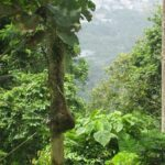 Гора обезьян фото номер 8