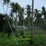 Неизвестный пляж Лаем Ка фото номер 5