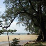Пляж Най Янг на Пхукете фото номер 4