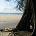 Пляж Най Янг на Пхукете фото номер 5