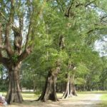 Фото Национального парка Сиринат номер 2