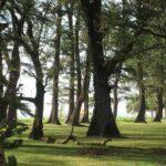 Фото Национального парка Сиринат номер 5