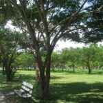 Фото номер 11 парка Saphan Hin в Пхукет-Тауне