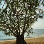 Фото номер 17 с пляжа Май Као