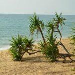 Фото номер 18 с пляжа Май Као