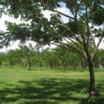 Фото номер 19 парка Saphan Hin в Пхукет-Тауне