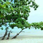 Фото номер 20 с пляжа Равай