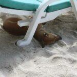 Фото номер 24 с пляжа Три Транг