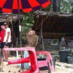 Фото номер 7 с пляжа Лаем Синг