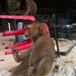 Фото номер 8 с пляжа Лаем Синг