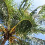 Фото номер 8 с пляжа Три Транг