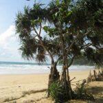 Фото с пляжа Найтон на Пхукете номер 14