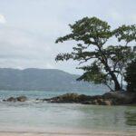 Фото с пляжа Найтон на Пхукете номер 5