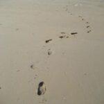Фото с пляжа Найтон на Пхукете номер 6