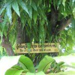 Храмы Пхукет-Туана фото номер 35