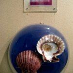 Музей морских раковин фото номер 10