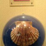 Музей морских раковин фото номер 11