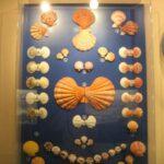 Музей морских раковин фото номер 12