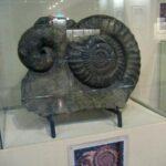Музей морских раковин фото номер 13