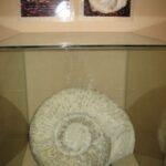 Музей морских раковин фото номер 14