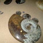 Музей морских раковин фото номер 18