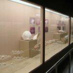 Музей морских раковин фото номер 20