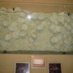 Музей морских раковин фото номер 24