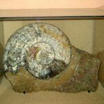 Музей морских раковин фото номер 25