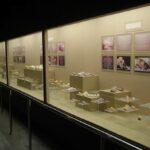 Музей морских раковин фото номер 27