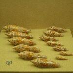 Музей морских раковин фото номер 28