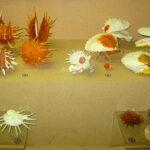 Музей морских раковин фото номер 29