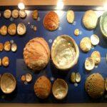 Музей морских раковин фото номер 3