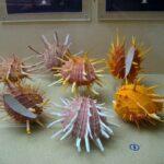 Музей морских раковин фото номер 30