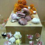 Музей морских раковин фото номер 34