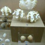 Музей морских раковин фото номер 35