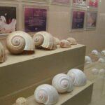 Музей морских раковин фото номер 36