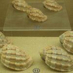 Музей морских раковин фото номер 37