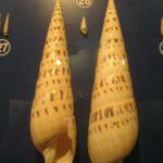 Музей морских раковин фото номер 42
