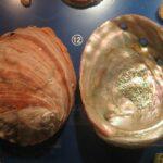 Музей морских раковин фото номер 45