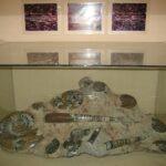 Музей морских раковин фото номер 49