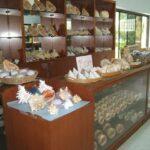 Музей морских раковин фото номер 55