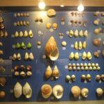 Музей морских раковин фото номер 7